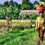 Plantage-in-Indonesien-150x150 in Java - Indonesiens Trauminsel